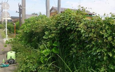フェンスに雑草が絡まる