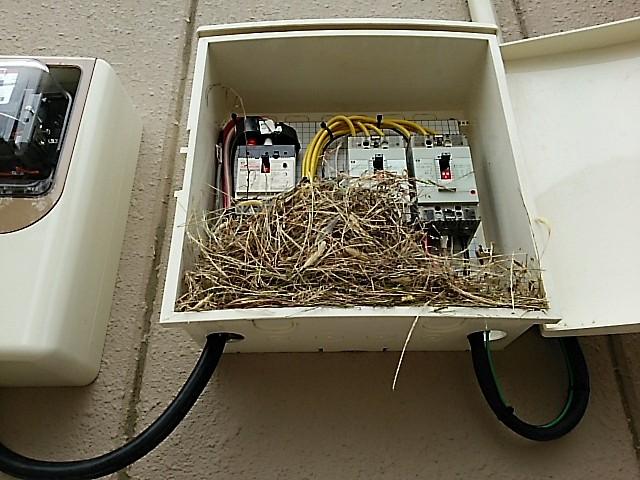分電盤に隙間があったため、そこから鳥が侵入し巣をつくってしまった