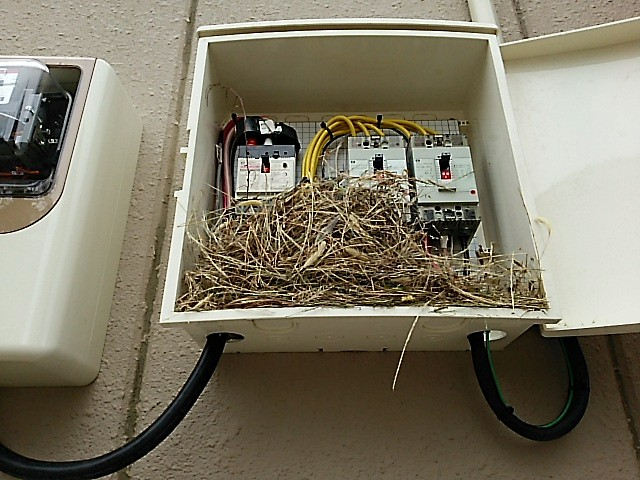 ブレーカーボックスの中に、鳥が巣をつくっていた